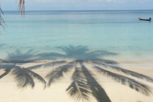 haad-yao-palms