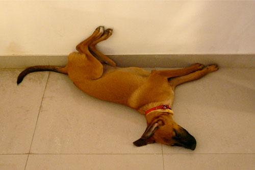 Kalu-sleeping